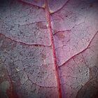 Crimson Autumn Leaf 2 by kahoutek24