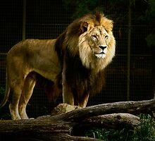 I am the King .... Dubbo Zoo  by Rosalie Dale