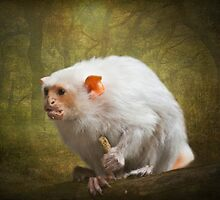 Silvery Marmoset by Lissywitch