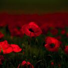 Poppy fields 5 by x- pose