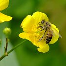 The Bee And The Buttercup by Tracy Faught