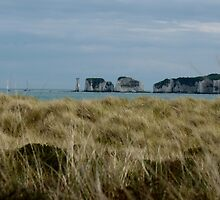 Old Harry by jonvin