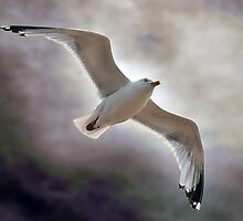 Soaring by Graham Taylor