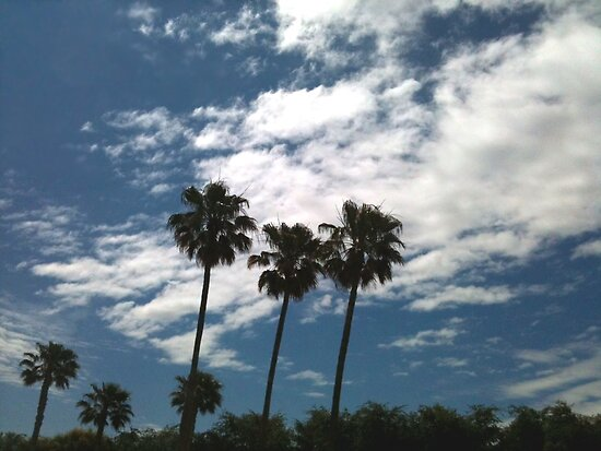 Palm Trees and Clouds by waddleudo