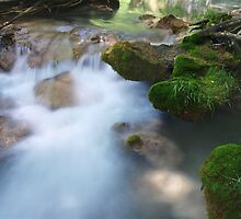 Moss on the Water by photoshot44