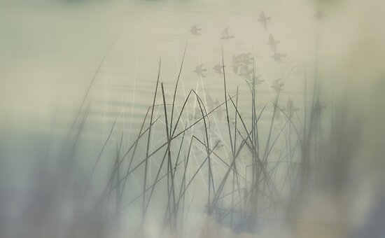 Timeless by Annie Lemay  Photography