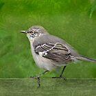 Mocking Bird by Kelly Rockett-Safford