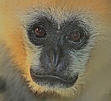Face full of gibbon by bluetaipan