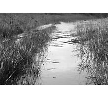 Silver reflections Photographic Print