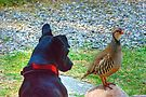 The Dog And Partridge by VoluntaryRanger