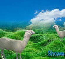 Shoama by MMohamed