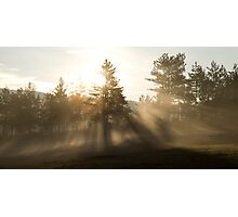 Sunrise bursting through trees and mist Photographic Print