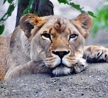 Lionheart by mltrue