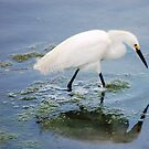 Egret with reflection by Meeli Sonn