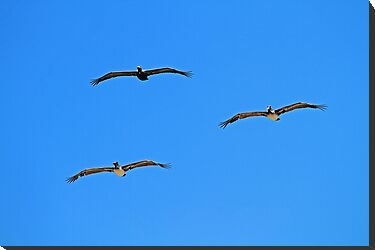 Pelican Trio in Flight by Terri~Lynn Bealle