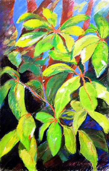 Umbrella leaves circa 1985 by Virginia McGowan