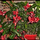 Happy Holidays by Sandra Lee Woods