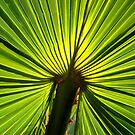 Palm Leaf by anchorsofhope