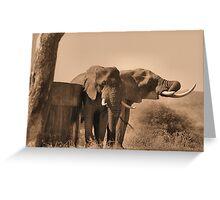 IN SEPIA- SENIOR COMPANY - THE AFRICAN ELEPHANT -Loxodonta africana Greeting Card