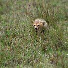 Chetah Cub Hiding in Grass by troffle24
