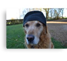 It's so cold in England, even the dogs wear wooly hats Canvas Print