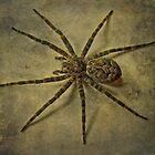 Dark Fishing Spider - Dolomedes tenebrosus by MotherNature