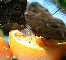 Afternoon Tea by Jason Dymock Photography