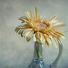 Yellow Gerbera by Karen Martin IPA