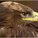 Steppe Eagle by alan tunnicliffe