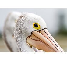 A Pelicans' Gaze Photographic Print