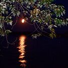 Moonlight Sonata  by Sandra Lee Woods