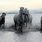 The White Horses of Camargue by Charlotte Jarvis