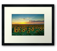 Sunflower Sea Framed Print