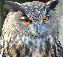 European Eagle Owl by bksoriginals
