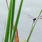 Dragonfly On Weeds by Cynthia48