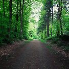 Forest Road Panorama by Henrik Hansen