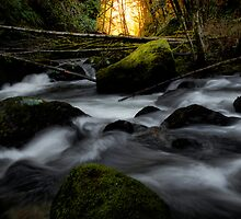 Up The Canyon by Charles & Patricia   Harkins ~ Picture Oregon