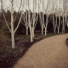 Silver Birches by TallulahMoody
