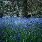 spring at Sheffield Park, East Sussex, UK by bartfrancois