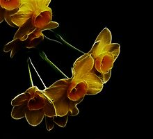 Mini daffodils fractal by danielisted