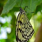Butterfly on Green Leaf by msqrd2