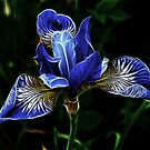 Blue flower fractal by Daniel Isted