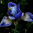 Blue flower fractal by danielisted