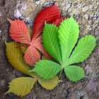 Seasoned Leaves by Great North Views