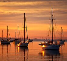 In morning light - Geelong by Hans Kawitzki