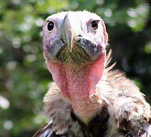 Vulture  by Unelanvhi