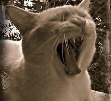 Yawn by Arianey
