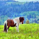 Stallion on the Hillside  by Karen Peron
