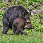 Bear Hug! by Daniel  Parent
