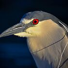Night Heron by George I. Davidson